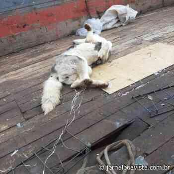 Homem mata cachorra a pauladas em Erechim – Jornal Boa Vista e Rádio Cultura 105.9 Fm - Jornal Boa Vista