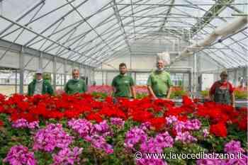 Merano verde: 250mila fiori l'anno, 9 km di passeggiate, parchi quanto 10 campi da calcio - La Voce di Bolzano
