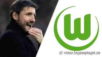 Van Bommel neuer Trainer des VfL Wolfsburg - Tagesspiegel