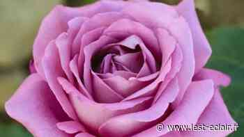 L'exposition des roses annulées à Romilly-sur-Seine - L'Est Eclair