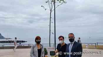 Castellammare di Stabia, in Villa Comunale arriva l'albero antismog - Positanonews - Positanonews