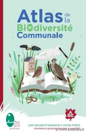 Hirondelles et Martinets en ville 44350 Guerande samedi 12 juin 2021 - Unidivers