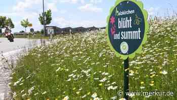 Blühwiesen in Holzkirchen: Pflanzenlisten jetzt auch per QR-Code - Merkur Online