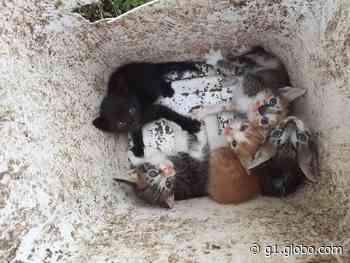 Feira de adoção de animais de estimação é realizada em Cacoal, RO, neste sábado (5) - G1