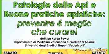Patologie delle api e buone pratiche apistiche, appuntamento a Bellosguardo ea Pastorano - Italia2TV