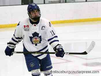 Sting begin OHL draft with feisty, high-scoring forwards - Wallaceburg Courier Press
