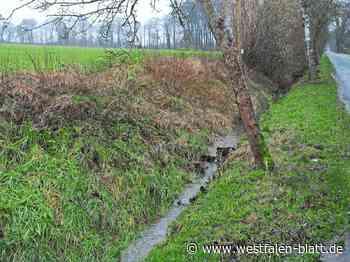 Ausgleichsmaßnahmen für geplantes Gewerbegebiet an der Salzuflener Straße in Vlotho: Grünland für Schafe oder Rinder - OWL - Westfalen-Blatt