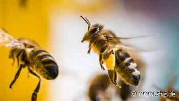 Bargteheide: Amerikanische Faulbrut in einem Bienenstand nachgewiesen | shz.de - shz.de