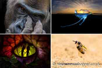 The most stunning shots from the Nature TTL Photographer of the Year Awards