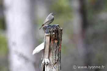 Les oiseaux nourris en bio sont en meilleure santé - L'Yonne Républicaine