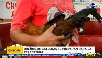 Galleras en Coclé se preparan para reapertura - TVN Panamá