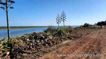 Movimento reporta que máquinas continuam no Parque Natural da Ria Formosa após levantado auto - Algarve Primeiro