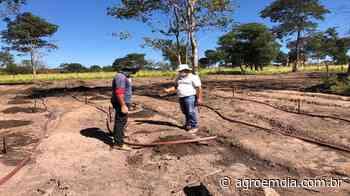 BA: Pequenos agricultores de Formosa do Rio Preto apostam no cultivo do alho - AGROemDIA