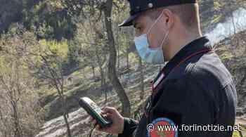 Individuato il responsabile dell'incendio boschivo di Modigliana - forlinotizie.net