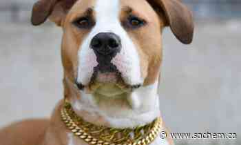 News Internet gone to the dogs: Stoney Creek pup Luna hits the big time on TikTok - Grand River Sachem