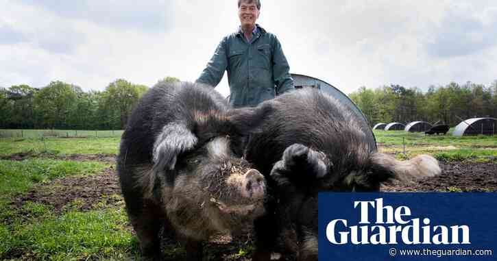 The pig whisperer: the Dutch farmer who wants to end factory farming