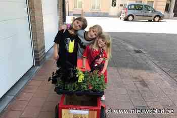 200 gratis plantjes in Belgische driekleur (Willebroek) - Het Nieuwsblad