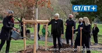 Bovenden: Ein Gedenkbaum für die Toten der Corona-Pandemie - Göttinger Tageblatt