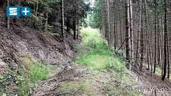 Borkenkäfer: Wie die Stadt Medebach ihren Wald retten will - Westfalenpost