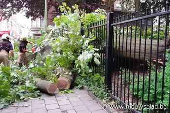 Omgevallen boom beschadigt wagens en bovenleiding tram (Jette) - Het Nieuwsblad