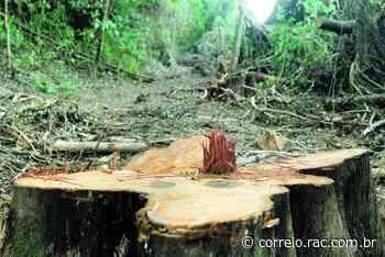 Ritmo de desmatamento e urbanização ameaça rio Atibaia - Correio Popular