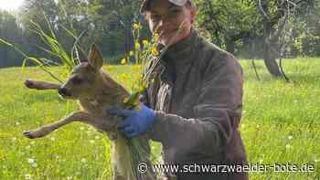 Kreisjägervereinigung - Drohne rettet Rehkitze in Hechingen vor Mähdrescher - Schwarzwälder Bote