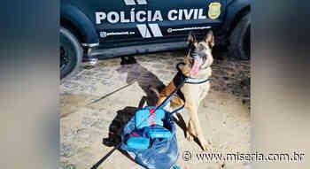 Garota é presa na rodoviária de Crato após cão da Polícia Civil farejar sua droga - Site Miséria