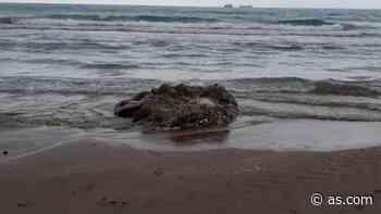 Un calamar gigante aparece muerto en una playa de Castellón - AS