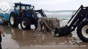 Retirada del calamar gigante en Castelló a cargo de operarios municipales - El Periódico Mediterráneo