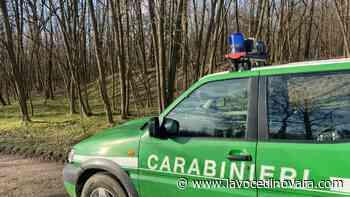 Incendio nei boschi di Borgo Ticino, trovato il responsabile - La voce di Novara - La Voce di Novara