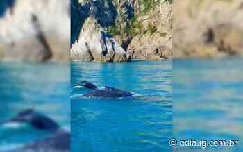 Baleias-jubarte encantam turistas em Arraial do Cabo - Jornal O Dia