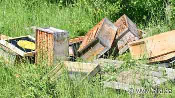 Bienenstock in Langenfeld zerstört - Diebe klauten 80 Liter Honig - BILD