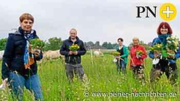 Stefanie Weigand will grüne Landrätin in Peine werden - Peiner Nachrichten