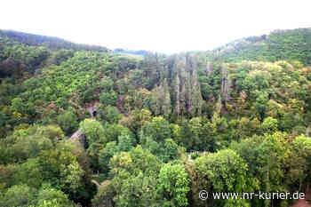 Bendorf erhält PEFC-Zertifikat für nachhaltige Waldbewirtschaftung - NR-Kurier - Internetzeitung für den Kreis Neuwied