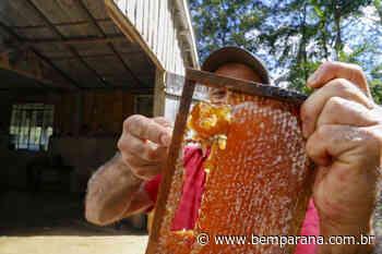 Puxado por Ortigueira, Paraná alcança a liderança na produção de mel - Bem Paraná - Bem Paraná