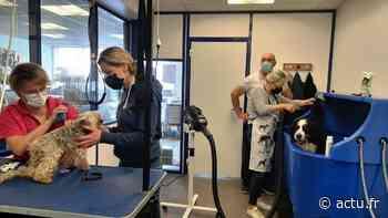 Evron : une toiletteuse rejoint le salon Museau et Babines tous les mardis - Le Courrier de la Mayenne