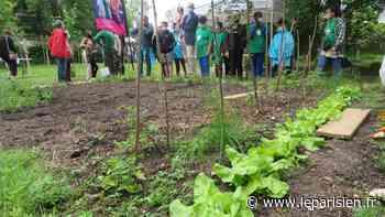 Yerres : le jardin des sœurs de la charité transformé en un espace bio et solidaire - Le Parisien