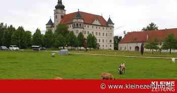 Schloss Hartheim: Eine Ausstellung über Rassenlehre, Eugenik bis hin zu Sterbehilfe - Kleine Zeitung