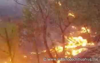 Incendio consume más de mil hectáreas de bosque en Casas Grandes - El Diario de Chihuahua