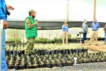 Ejército se une a proyecto de siembra masiva en el Páramo de Chingaza - Extrategia Medios