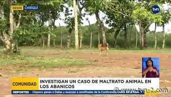 Denuncian acto de crueldad contra un perro y otros animales en Chiriquí - TVN Noticias