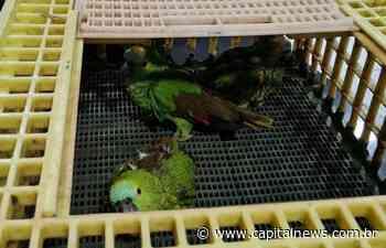Chuva de granizo mata aves em Naviraí e PMA resgata papagaios feridos: vídeo - Capital News