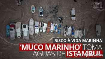 VÍDEO: 'Muco do mar' ameaça vida marinha e atividade pesqueira na Turquia - G1