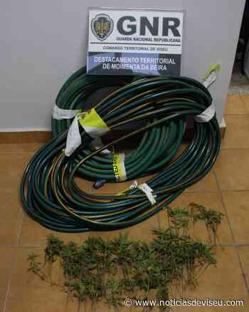 São João da Pesqueira – Detido por tráfico de estupefacientes   Notícias de Viseu - Notícias de Viseu