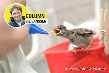COLUMN. Sil Janssen opent hotel in de Voerstreek