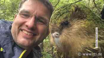 Von Laubach nach Neuseeland: Rettung für bedrohten Kakapo - RTL Online