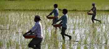 Farmers in Asia must increase cereal yields by 50-75% to meet demands of increasing population in next 25 years: Report