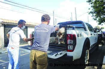 Suzano prepara programação especial no mês do Meio Ambiente - Jornal Impresso Brasil