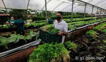 Horta social doa meia tonelada de verduras para instituições beneficentes de Fortaleza - G1