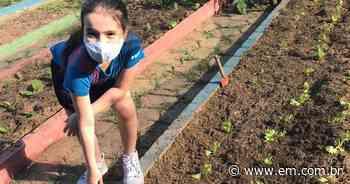 Crianças em Ipatinga desenvolvem biofertilizante em horta escolar - Estado de Minas